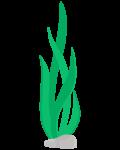 alga 3