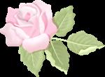 apliques jardim rosa 2
