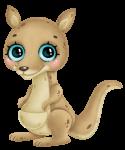 canguru cute
