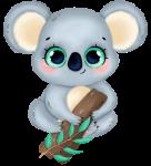 coala cute