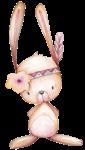 coelho 3