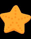 estrela do mar 5