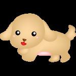 cachorro cute