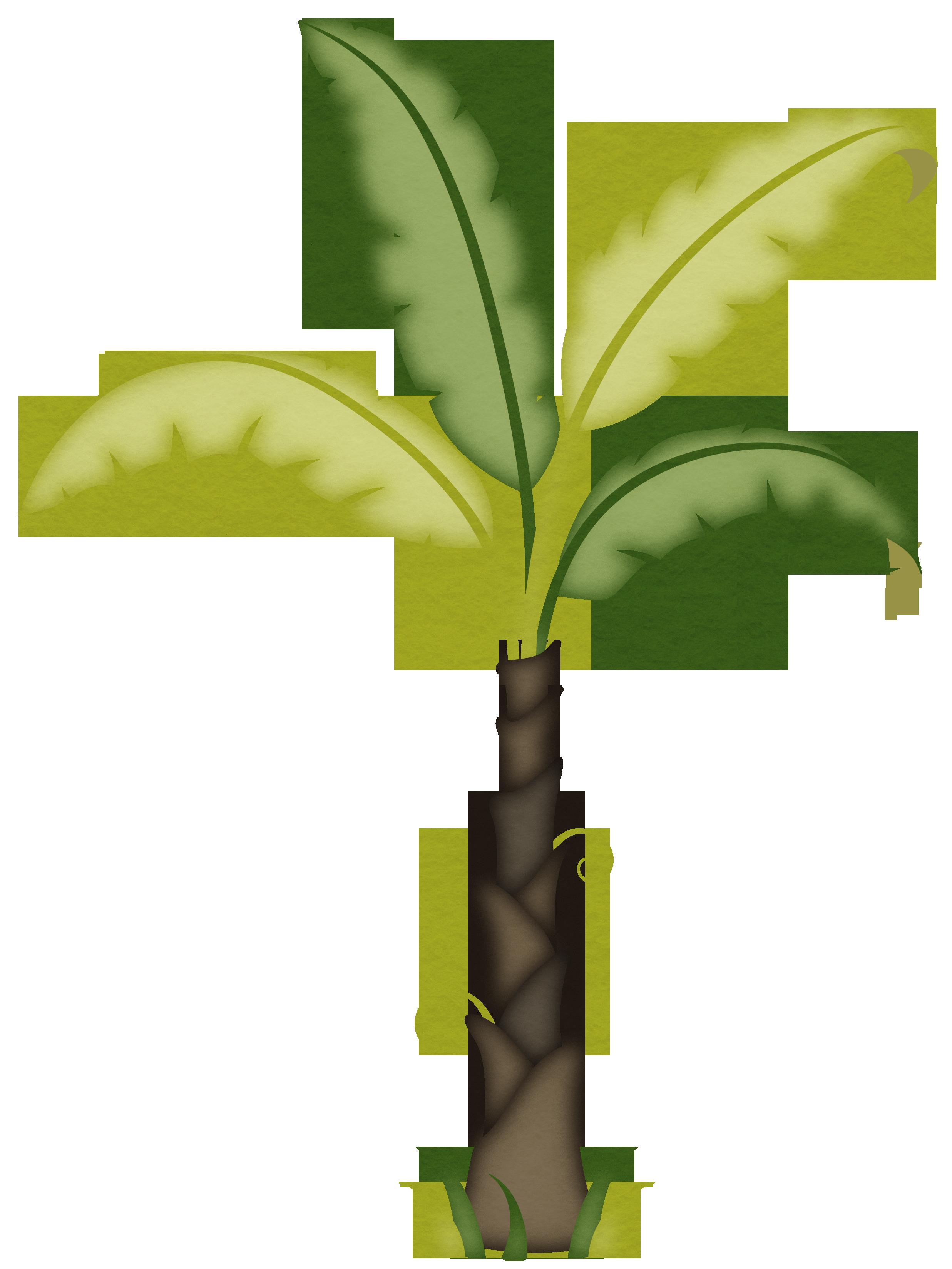 coqueiro 1