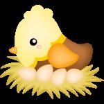 galinha cute