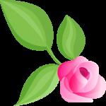 rosa 2 1