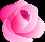 rosa 4 1